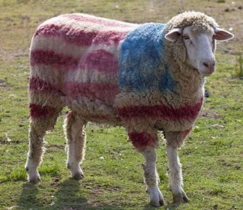 red-white-blue-sheep